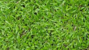 Зеленая трава Справочная информация Стоковая Фотография