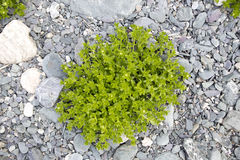 Зеленая трава среди утесов Стоковое Изображение RF