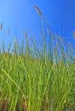 Зеленая трава Сторона банка Нила Стоковая Фотография