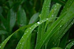 Зеленая трава с капельками воды Стоковые Изображения RF