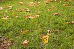 Зеленая трава с крупным планом макроса листьев осени Стоковые Фото