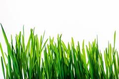 Зеленая трава с отражением изолированная на белой предпосылке стоковые изображения