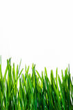 Зеленая трава с отражением изолированная на белой предпосылке Стоковое Изображение