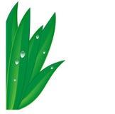 Зеленая трава с падениями росы Бесплатная Иллюстрация