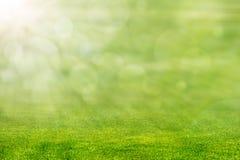 Зеленая трава с светом Солнця Стоковая Фотография