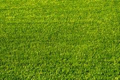 Зеленая трава футбольного поля текстура Стоковые Фотографии RF