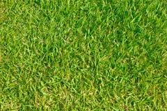 Зеленая трава футбольного поля. Стоковые Изображения RF