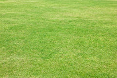 Зеленая трава футбольного поля. Стоковые Фото
