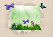 Зеленая трава через сорванную бумагу Стоковые Фотографии RF