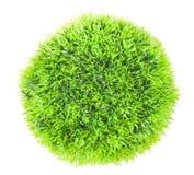 Зеленая трава шарика Стоковое фото RF