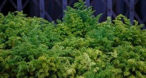 Зеленая трава для слова места предпосылки Стоковое Изображение RF