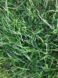 Зеленая трава Стоковые Изображения