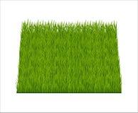 Зеленая трава иллюстрация вектора