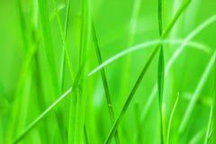 Зеленая трава стоковые фотографии rf