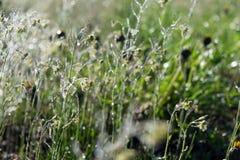 Зеленая трава стоковые фото