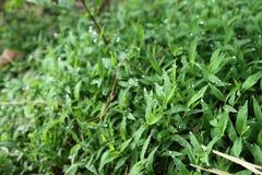 Зеленая трава Стоковое Фото