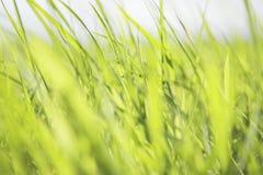 Зеленая трава Backgound Стоковая Фотография RF
