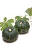 зеленая тыква Стоковое Изображение RF