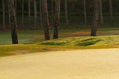 Зеленая лужайка в сосновом лесе Стоковое Изображение RF