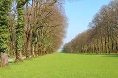 Зеленая лужайка в старом парке весной Стоковое фото RF
