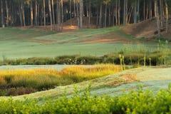 Зеленая лужайка, сосновый лес Стоковое Изображение
