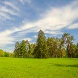 Зеленая лужайка с деревьями Стоковые Фотографии RF