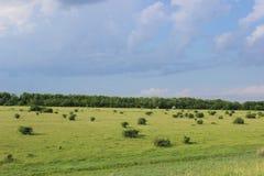 Зеленая лужайка с кустарниками Стоковые Фотографии RF