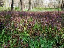 Зеленая лужайка с полевыми цветками и травой стоковое фото rf