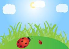 Зеленая лужайка с ladybirds Стоковые Фото