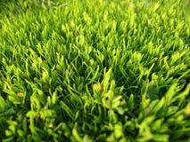 Зеленая лужайка травы сада Стоковая Фотография RF