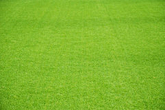Зеленая лужайка Стоковые Фотографии RF