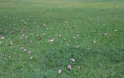 зеленая лужайка Стоковая Фотография RF