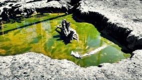 Зеленая лужица воды Стоковое Изображение RF
