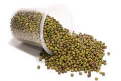Зеленая фасоль Стоковое Изображение
