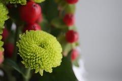 Зеленая хризантема Стоковые Изображения