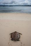 Зеленая черепаха на пляже Стоковое фото RF