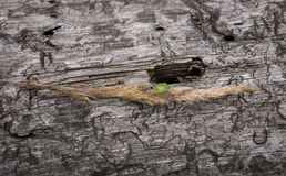 Зеленая черепашка (дерево) Стоковая Фотография RF