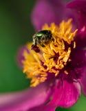 Зеленая черепашка на цветке Стоковое Изображение RF