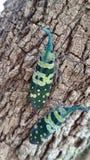 Зеленая черепашка Стоковое фото RF
