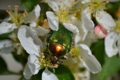 Зеленая черепашка Стоковая Фотография