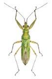 Зеленая черепашка Стоковые Изображения RF