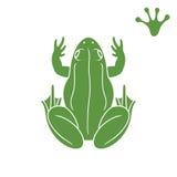 Зеленая лягушка Абстрактная лягушка на белой предпосылке Стоковая Фотография