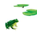 Зеленая лягушка с пятнами, запятнанная жаба, лилия воды Стоковая Фотография