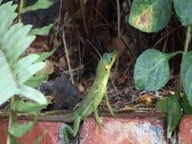 Зеленая ящерица в тропиках сток-видео