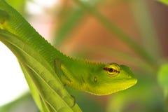Зеленая ящерица гекконовых на лист Стоковые Изображения RF