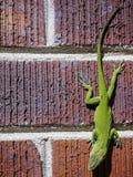 Зеленая ящерица на красных кирпичах. стоковые фото