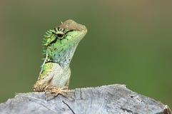 Зеленая ящерица с пнем в природе стоковое изображение