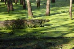 Зеленое болото на канале Raritan Стоковые Изображения RF