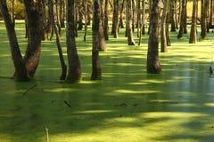Зеленое болото на канале Raritan Стоковая Фотография