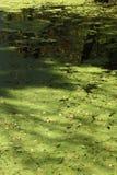 Зеленое болото на канале Raritan Стоковое Изображение